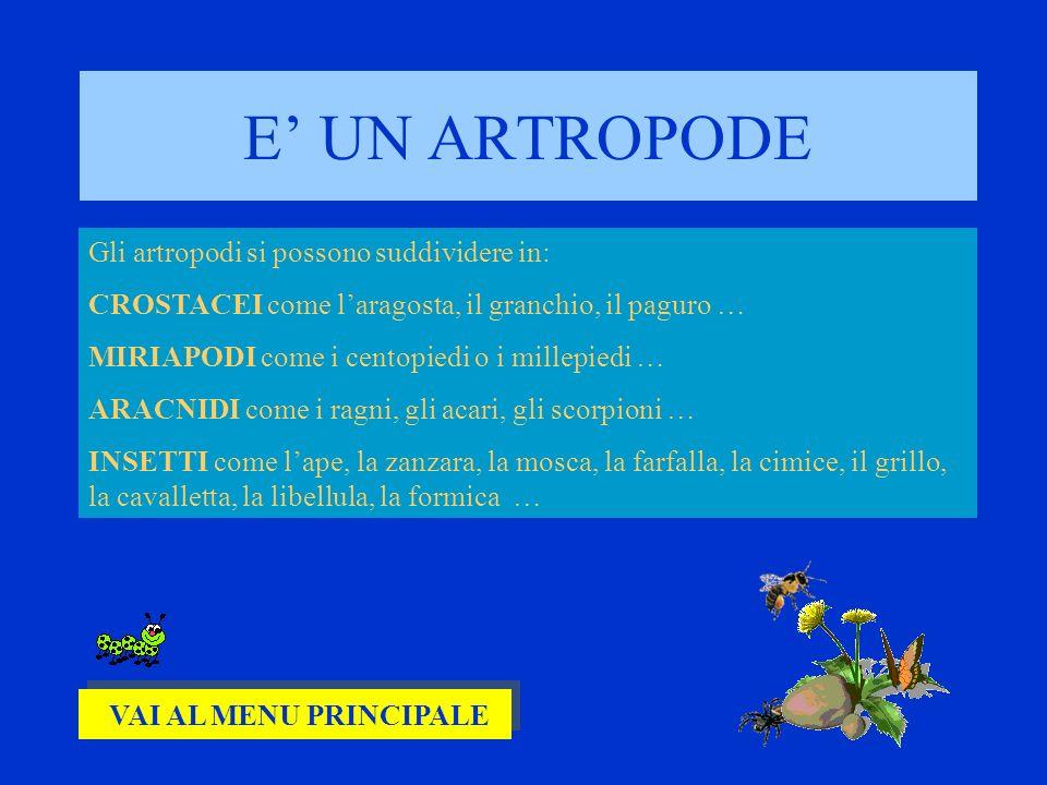 E UN ARTROPODE Gli artropodi si possono suddividere in: CROSTACEI come laragosta, il granchio, il paguro … MIRIAPODI come i centopiedi o i millepiedi