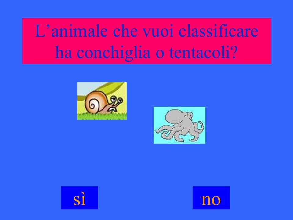 Lanimale che vuoi classificare ha conchiglia o tentacoli? sìno