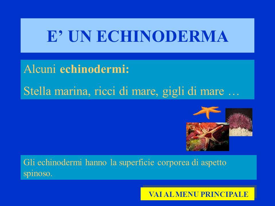 E UN ECHINODERMA Alcuni echinodermi: Stella marina, ricci di mare, gigli di mare … Gli echinodermi hanno la superficie corporea di aspetto spinoso. VA
