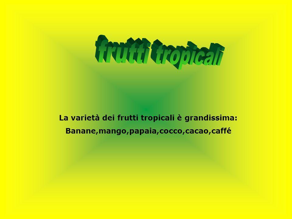 La varietà dei frutti tropicali è grandissima: Banane,mango,papaia,cocco,cacao,caffé