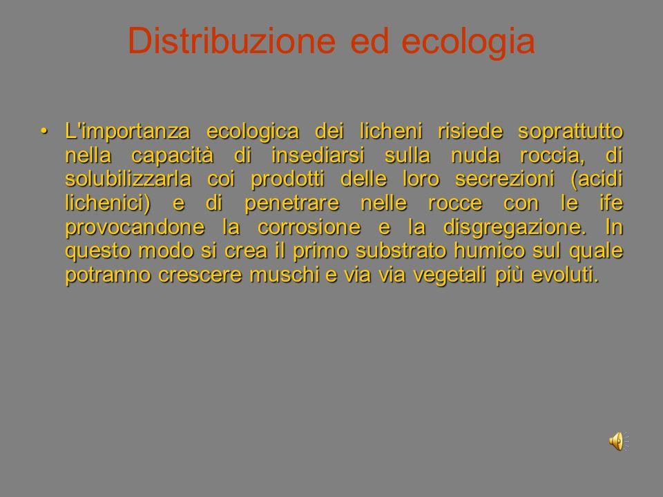 Distribuzione ed ecologia Nella maggior parte delle specie la fotosintesi raggiunge il rendimento ottimale nell intervallo tra 10 °C e 15 °C, quindi anche le basse temperature dell alta montagna favoriscono i licheni.