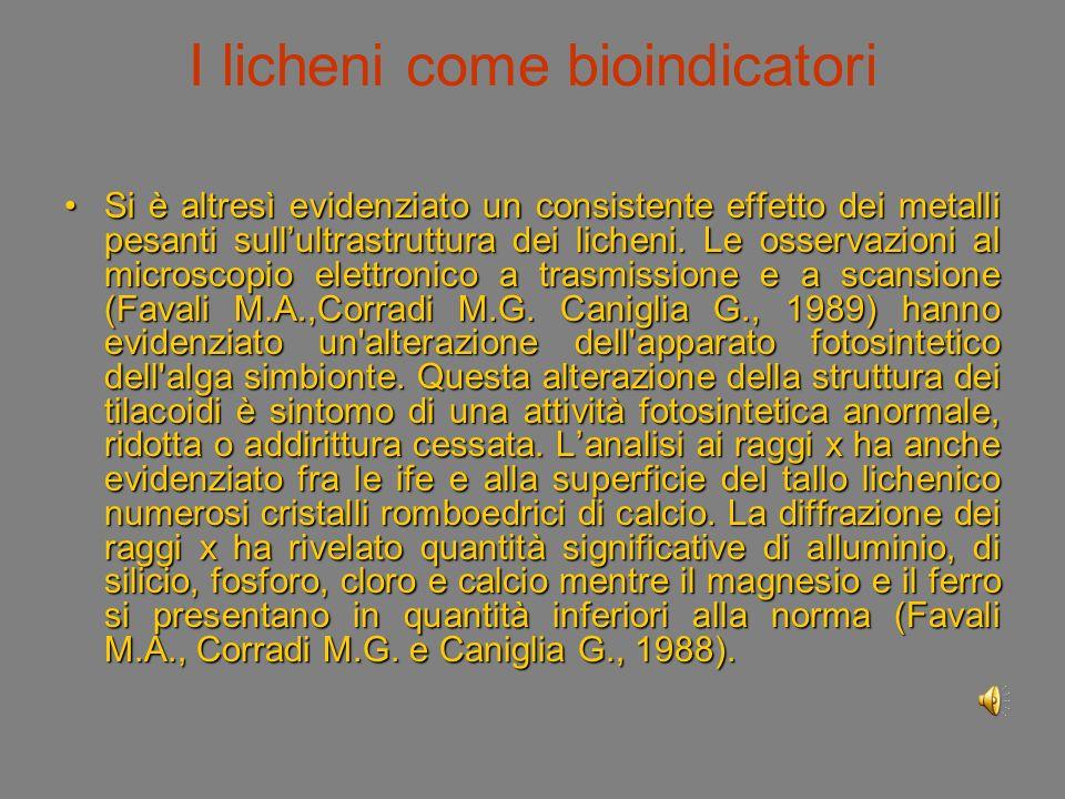 I licheni come bioindicatori Si è altresì evidenziato un consistente effetto dei metalli pesanti sullultrastruttura dei licheni.