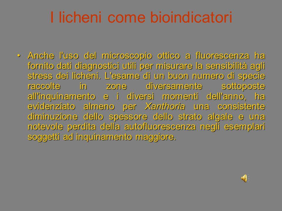 I licheni come bioindicatori Anche l uso del microscopio ottico a fluorescenza ha fornito dati diagnostici utili per misurare la sensibilità agli stress dei licheni.