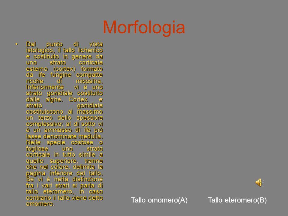 Morfologia I talli possono avere consistenza gelatinosa, cuoiosa, carnosa, erbacea; la colorazione può variare dalle diverse tonalità del verde, del b
