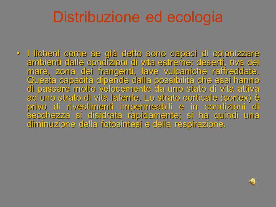 Distribuzione ed ecologia I licheni come se già detto sono capaci di colonizzare ambienti dalle condizioni di vita estreme: deserti, riva del mare, zona dei frangenti, lave vulcaniche raffreddate.