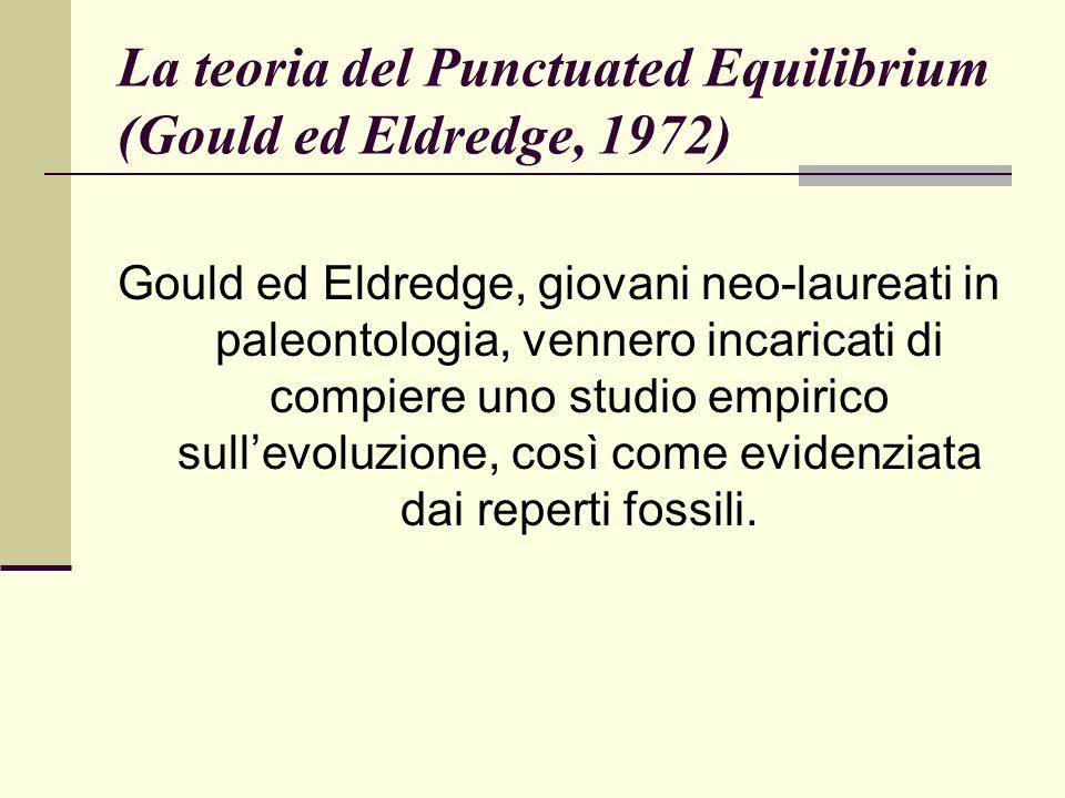 La teoria del Punctuated Equilibrium (Gould ed Eldredge, 1972) Gould ed Eldredge, giovani neo-laureati in paleontologia, vennero incaricati di compiere uno studio empirico sullevoluzione, così come evidenziata dai reperti fossili.