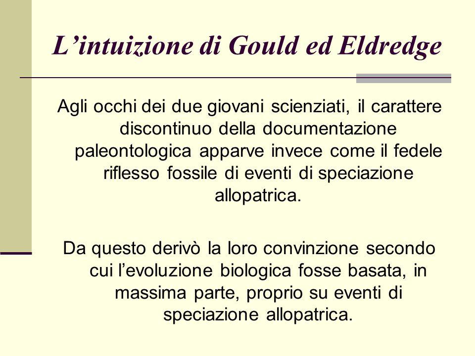 Lintuizione di Gould ed Eldredge Agli occhi dei due giovani scienziati, il carattere discontinuo della documentazione paleontologica apparve invece come il fedele riflesso fossile di eventi di speciazione allopatrica.