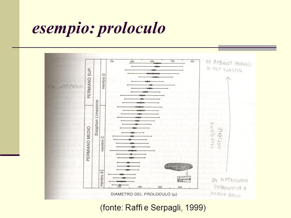 esempio: proloculo (fonte: Raffi e Serpagli, 1999)