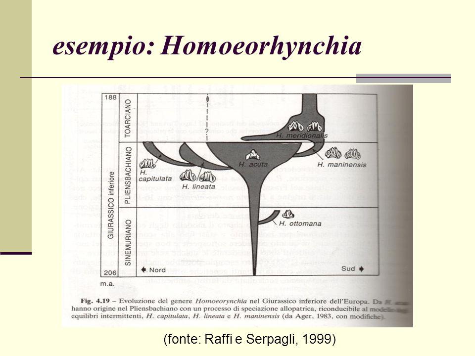esempio: Homoeorhynchia (fonte: Raffi e Serpagli, 1999)