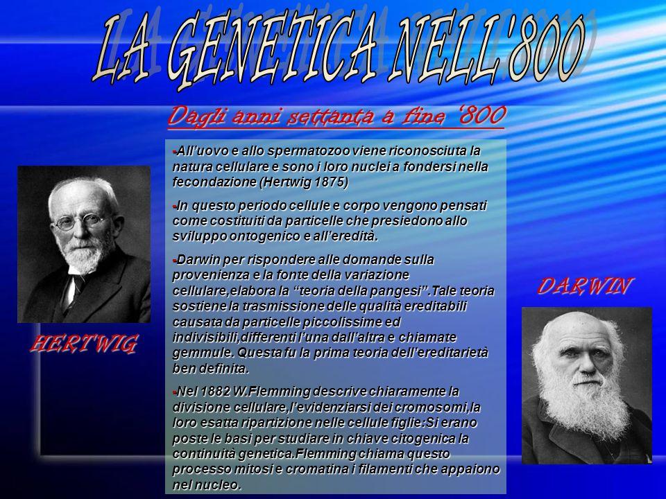 Dagli anni settanta a fine 800 -Alluovo e allo spermatozoo viene riconosciuta la natura cellulare e sono i loro nuclei a fondersi nella fecondazione (