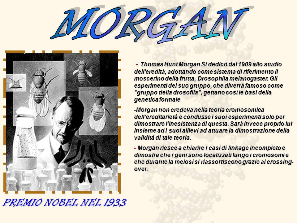 - Thomas Hunt Morgan Si dedicò dal 1909 allo studio dell'eredità, adottando come sistema di riferimento il moscerino della frutta, Drosophila melanoga