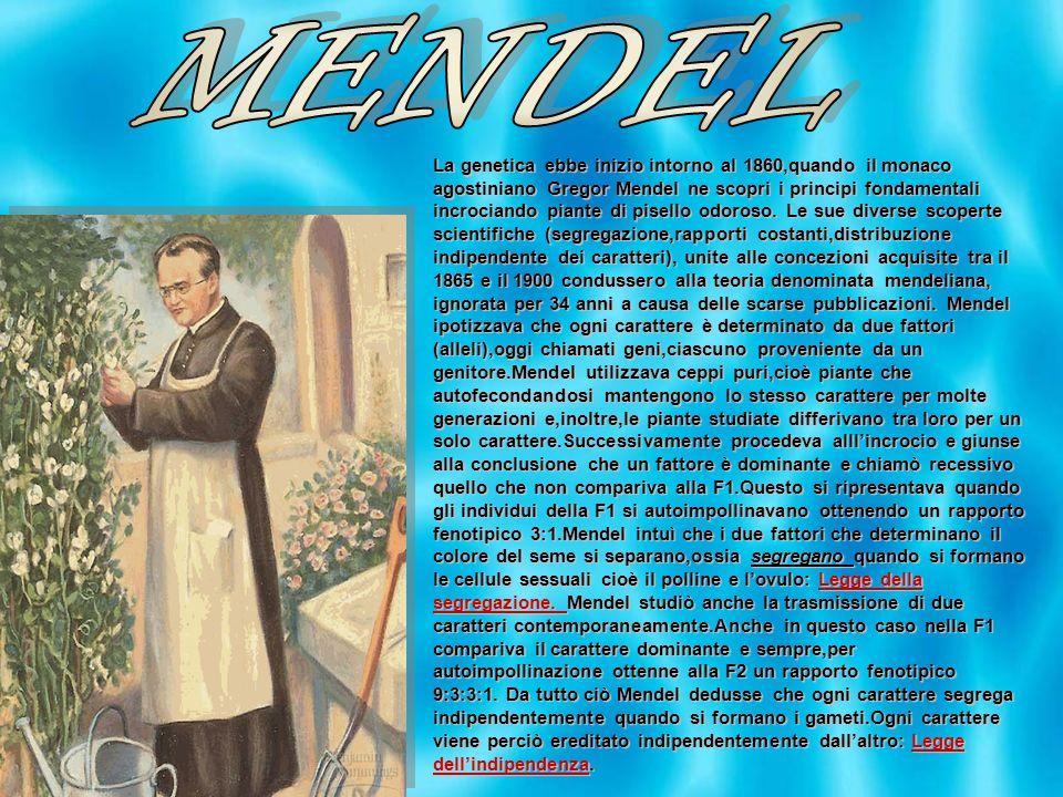 La genetica ebbe inizio intorno al 1860,quando il monaco agostiniano Gregor Mendel ne scopri i principi fondamentali incrociando piante di pisello odo