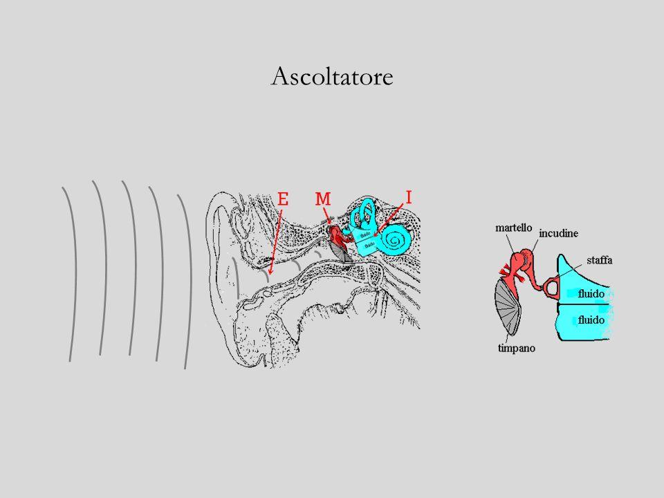 MEZZO INTERPOSTO: oggetto materiale che – comprimendosi e rarefacendosi – propaga loscillazione rarefazionecompressione
