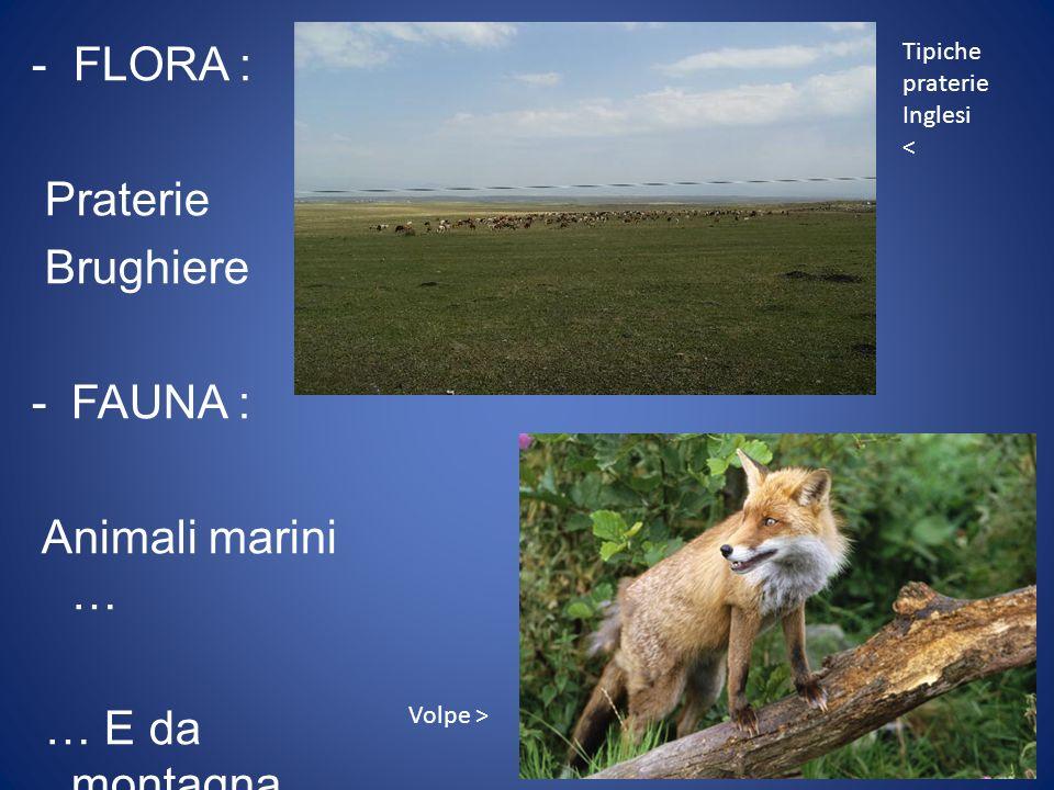 - FLORA : Praterie Brughiere -F-FAUNA : Animali marini … … E da montagna Tipiche praterie Inglesi < Volpe >