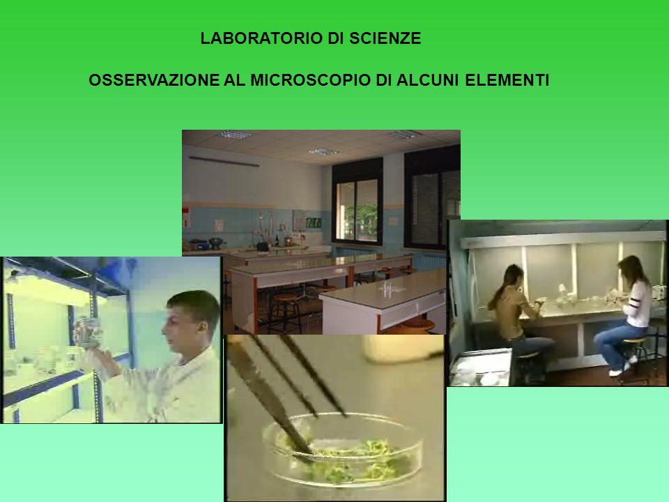 LABORATORIO DI SCIENZE OSSERVAZIONE AL MICROSCOPIO DI ALCUNI ELEMENTI