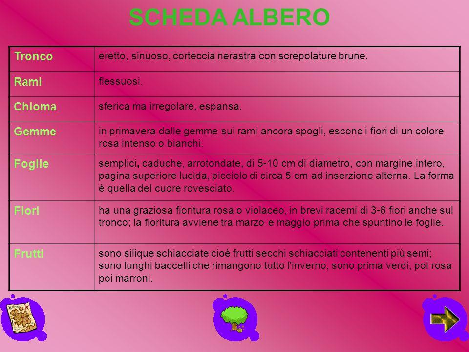 Famiglia: FagaceaeNome scientifico: Quercus LA QUERCIA Note di riconoscimento: quercia è il nome comune di circa 300 specie di piante legnose, arboree o arbustive molto diffuse in Italia.