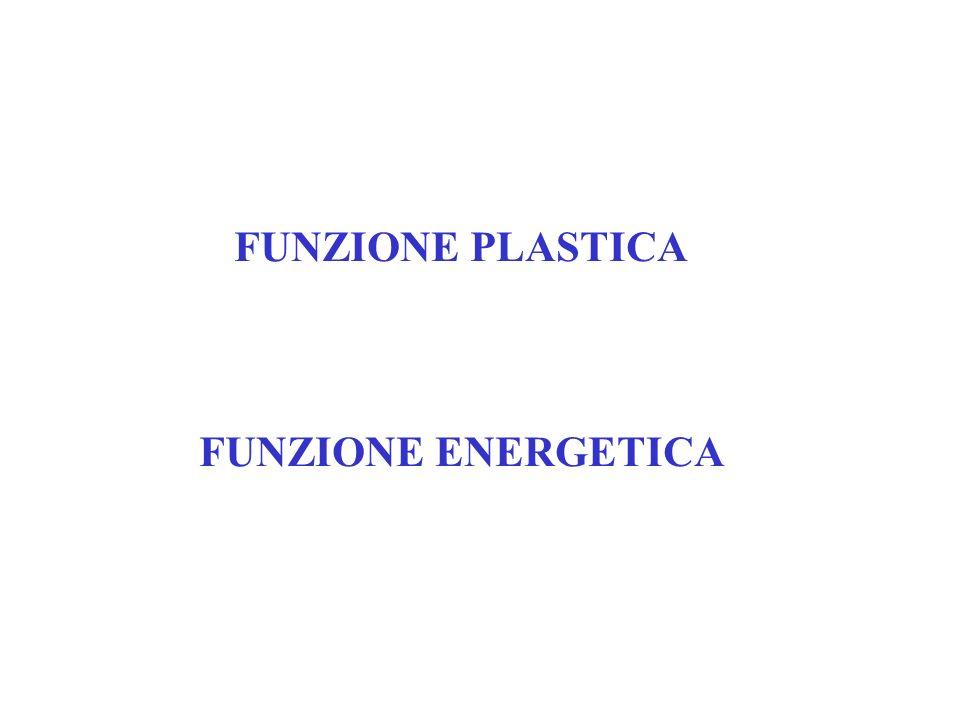 FUNZIONE PLASTICA FUNZIONE ENERGETICA