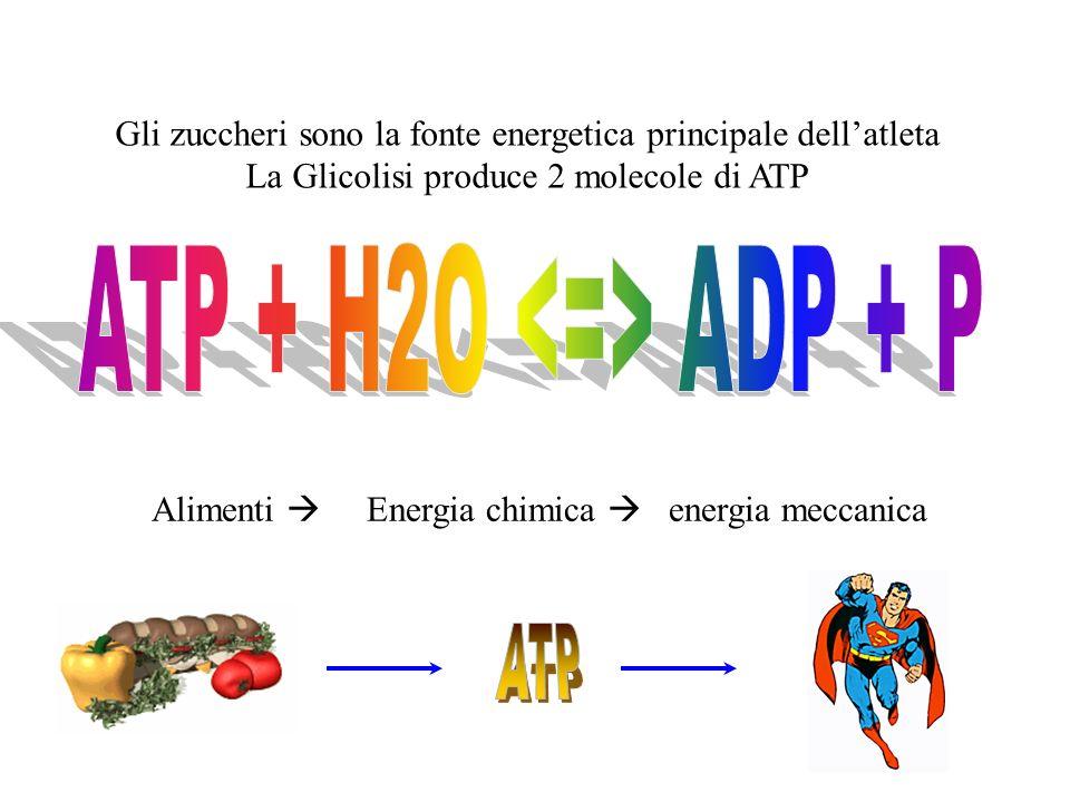 Gli zuccheri sono la fonte energetica principale dellatleta La Glicolisi produce 2 molecole di ATP Alimenti Energia chimica energia meccanica