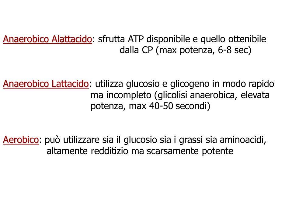 Anaerobico Alattacido Anaerobico Alattacido: sfrutta ATP disponibile e quello ottenibile dalla CP (max potenza, 6-8 sec) Anaerobico Lattacido Anaerobi