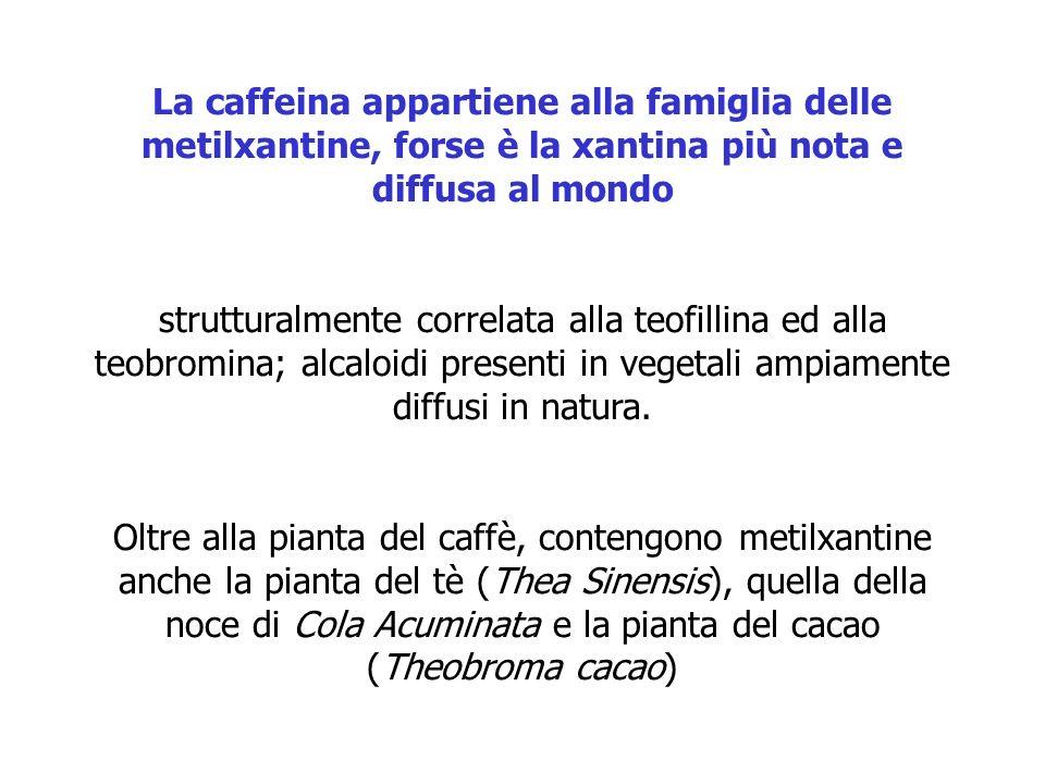 La caffeina appartiene alla famiglia delle metilxantine, forse è la xantina più nota e diffusa al mondo strutturalmente correlata alla teofillina ed a