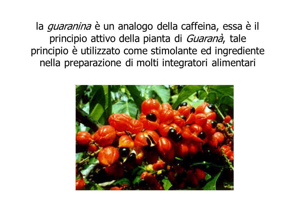 la guaranina è un analogo della caffeina, essa è il principio attivo della pianta di Guaranà, tale principio è utilizzato come stimolante ed ingredien