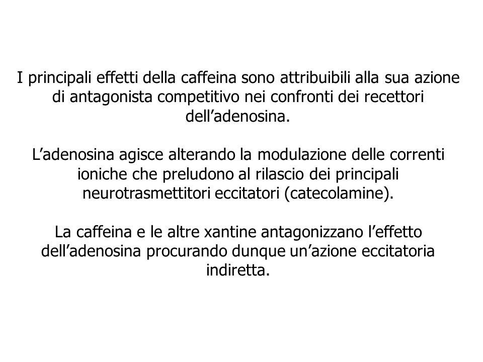 I principali effetti della caffeina sono attribuibili alla sua azione di antagonista competitivo nei confronti dei recettori delladenosina. Ladenosina