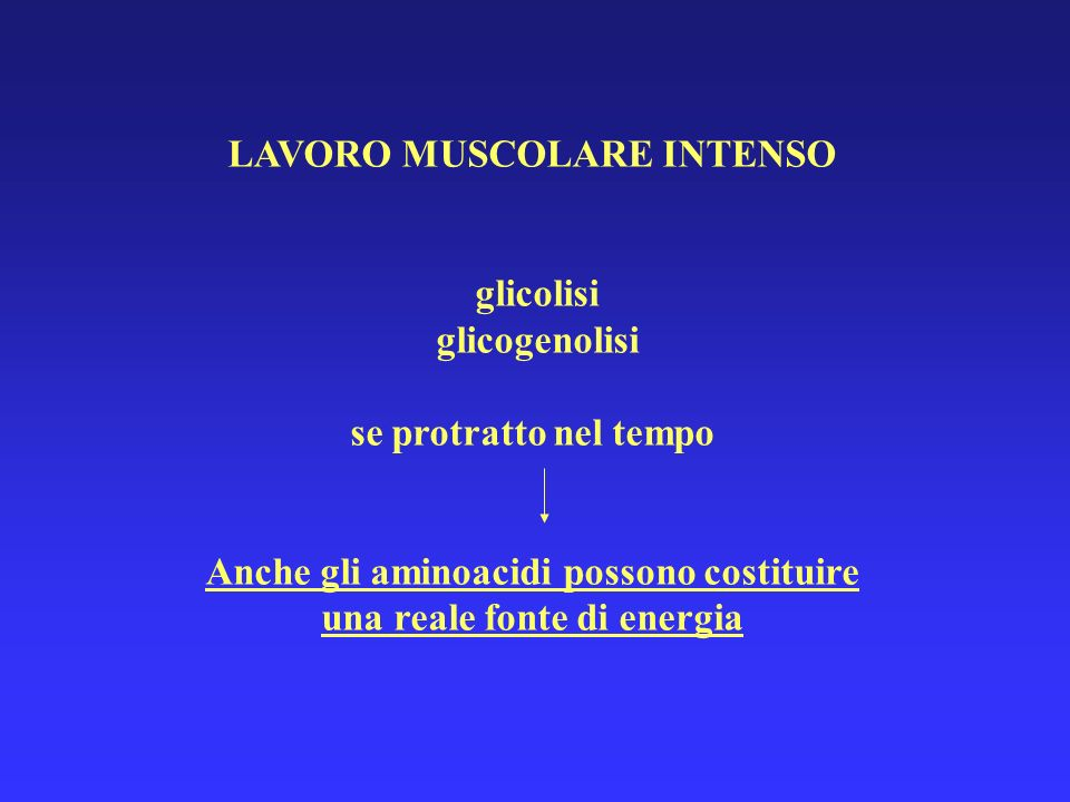 LAVORO MUSCOLARE INTENSO glicolisi glicogenolisi se protratto nel tempo Anche gli aminoacidi possono costituire una reale fonte di energia