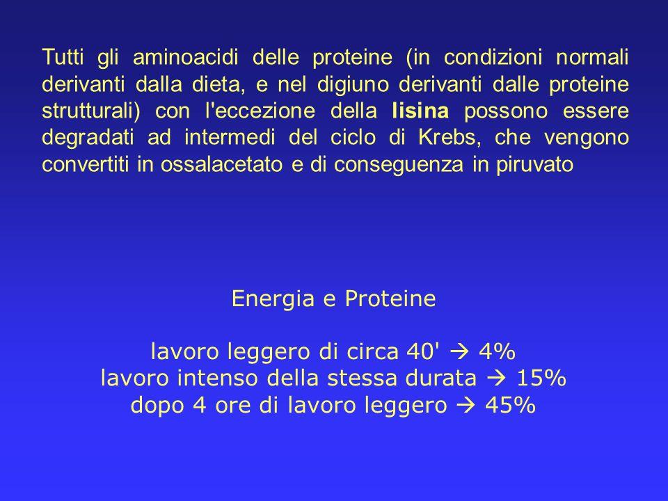 Tutti gli aminoacidi delle proteine (in condizioni normali derivanti dalla dieta, e nel digiuno derivanti dalle proteine strutturali) con l'eccezione