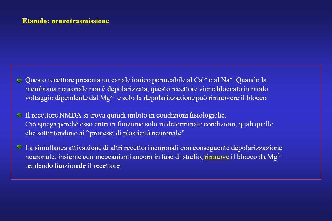 Etanolo: neurotrasmissione Questo recettore presenta un canale ionico permeabile al Ca 2+ e al Na +. Quando la membrana neuronale non è depolarizzata,