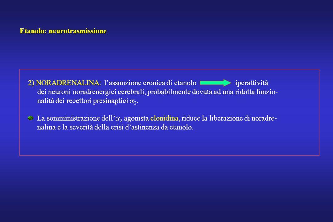 Etanolo: neurotrasmissione 2) NORADRENALINA: lassunzione cronica di etanolo iperattività dei neuroni noradrenergici cerebrali, probabilmente dovuta ad