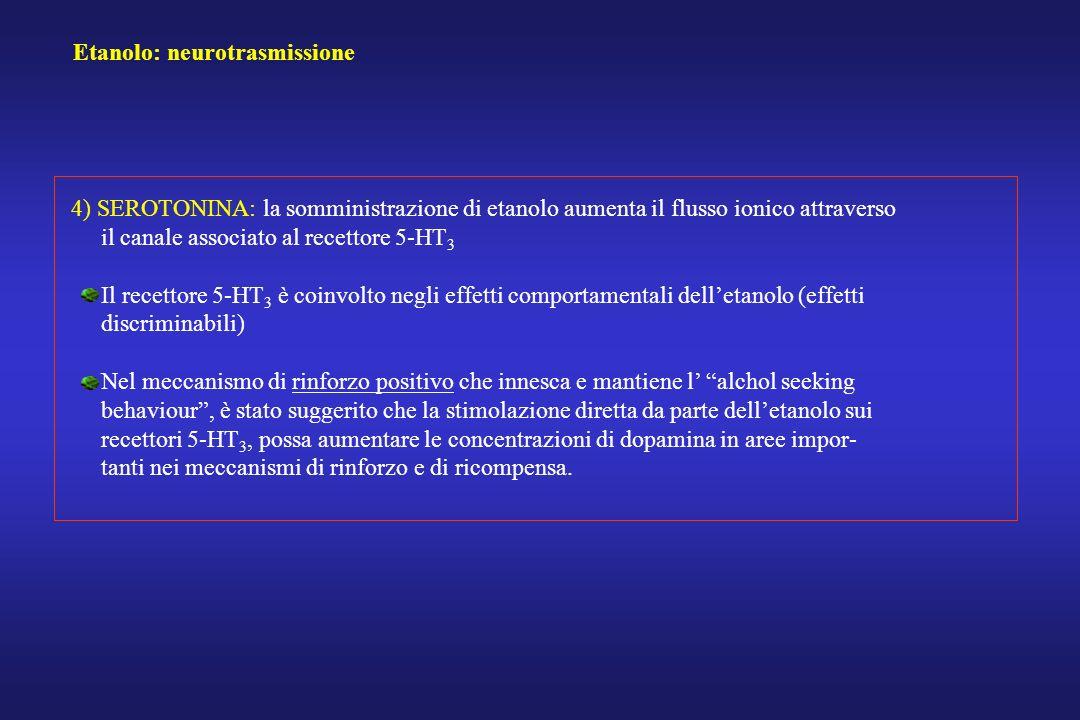 Etanolo: neurotrasmissione 4) SEROTONINA: la somministrazione di etanolo aumenta il flusso ionico attraverso il canale associato al recettore 5-HT 3 I
