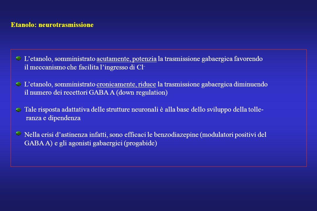 Etanolo: neurotrasmissione Letanolo, somministrato acutamente, potenzia la trasmissione gabaergica favorendo il meccanismo che facilita lingresso di C