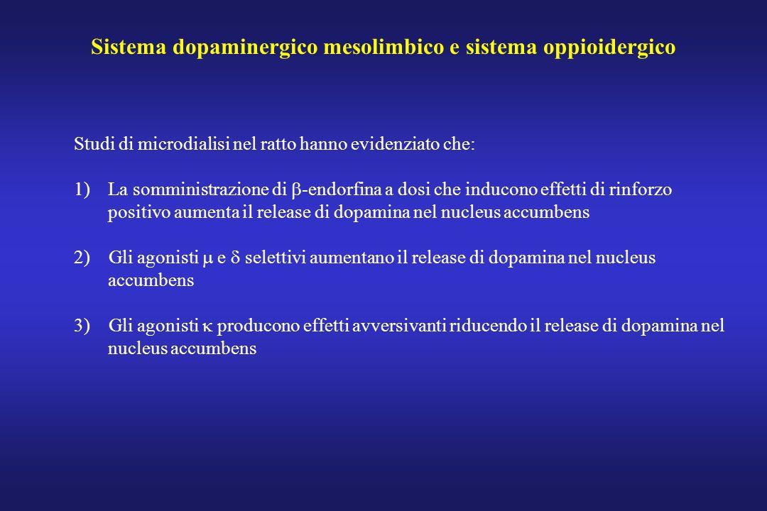 Sistema dopaminergico mesolimbico e sistema oppioidergico Studi di microdialisi nel ratto hanno evidenziato che: 1)La somministrazione di -endorfina a