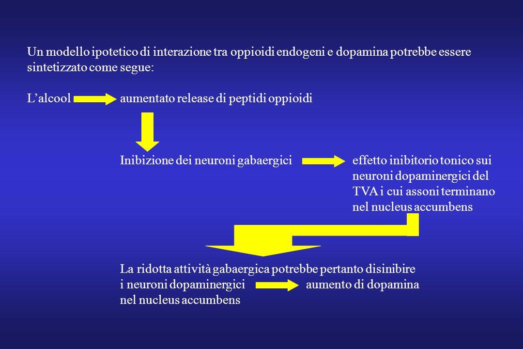 Un modello ipotetico di interazione tra oppioidi endogeni e dopamina potrebbe essere sintetizzato come segue: Lalcoolaumentato release di peptidi oppi