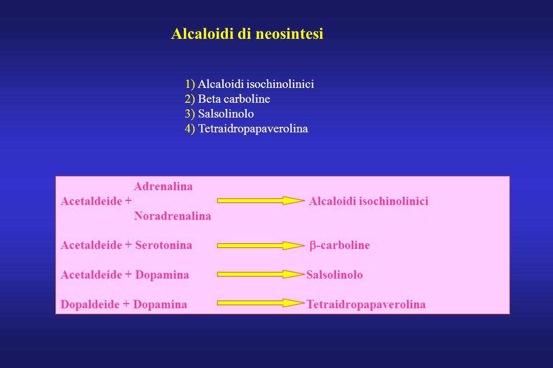 Alcaloidi di neosintesi 1) Alcaloidi isochinolinici 2) Beta carboline 3) Salsolinolo 4) Tetraidropapaverolina Adrenalina Acetaldeide + Alcaloidi isoch