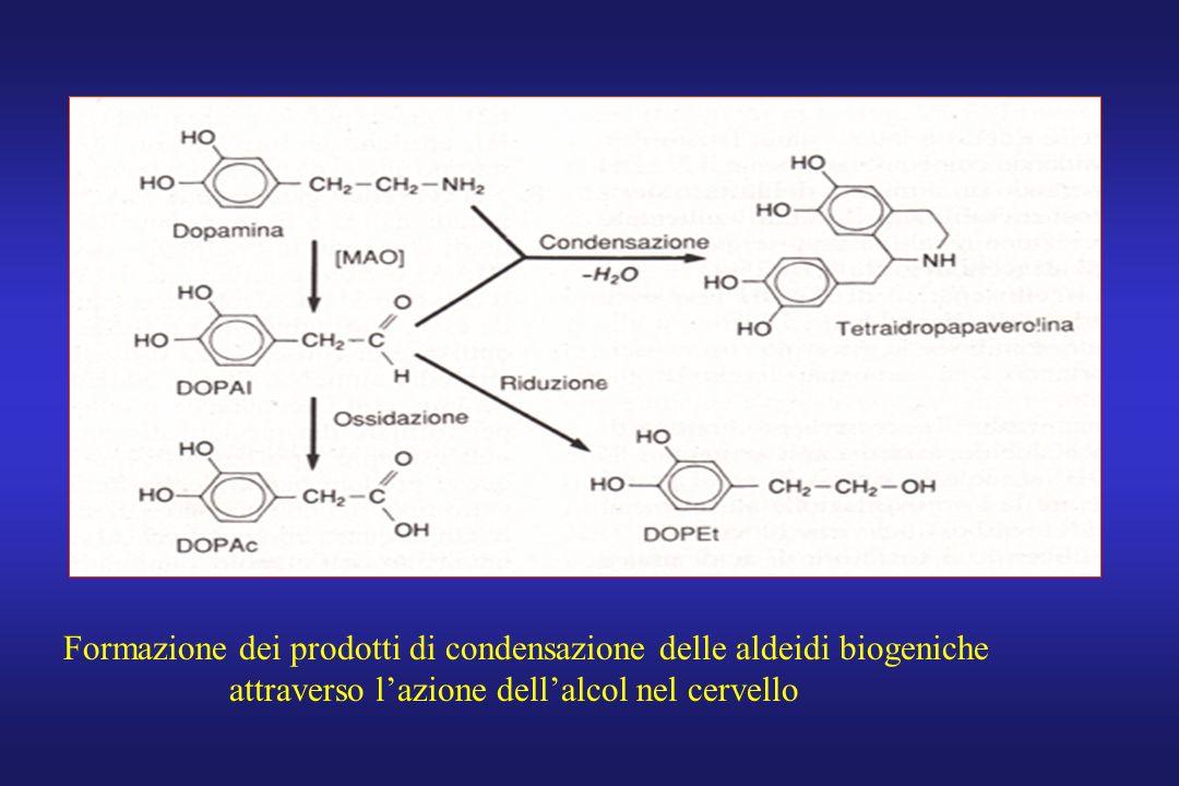 Formazione dei prodotti di condensazione delle aldeidi biogeniche attraverso lazione dellalcol nel cervello