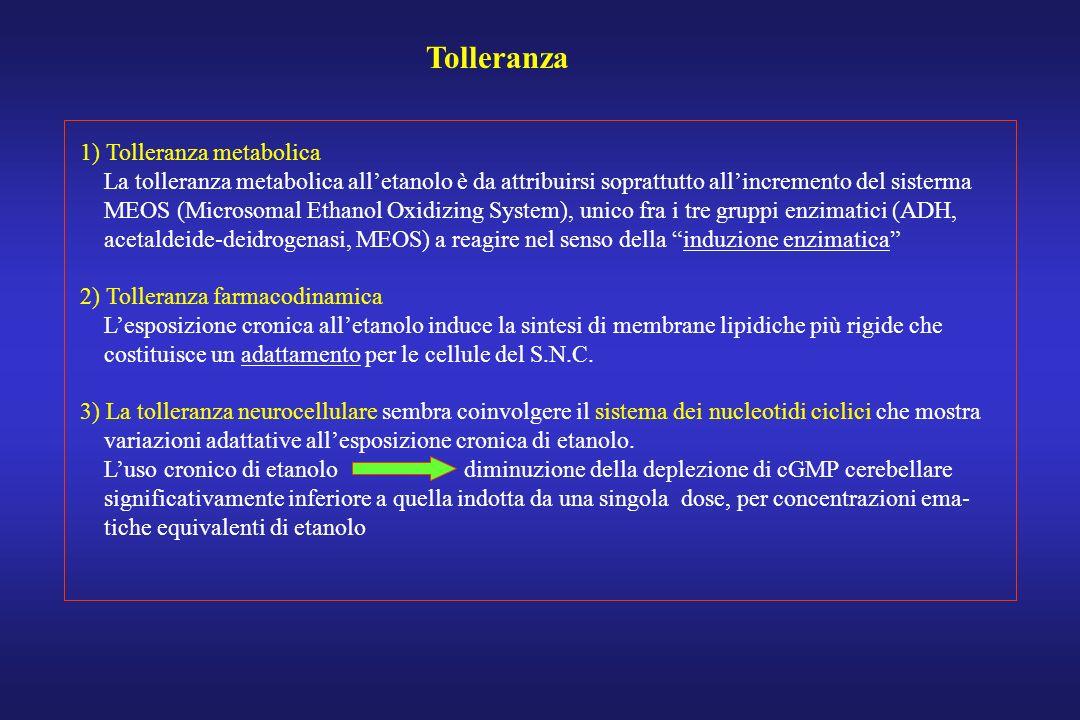 Tolleranza 1) Tolleranza metabolica La tolleranza metabolica alletanolo è da attribuirsi soprattutto allincremento del sisterma MEOS (Microsomal Ethan