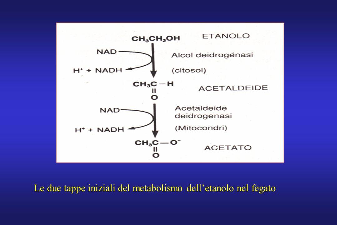 Le due tappe iniziali del metabolismo delletanolo nel fegato