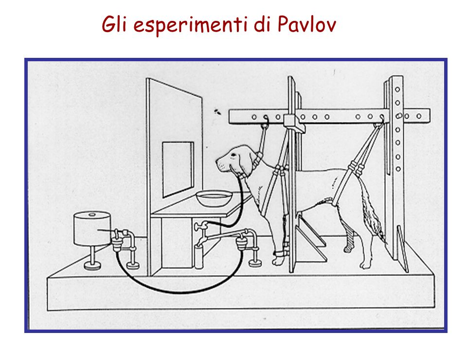 Gli esperimenti di Pavlov