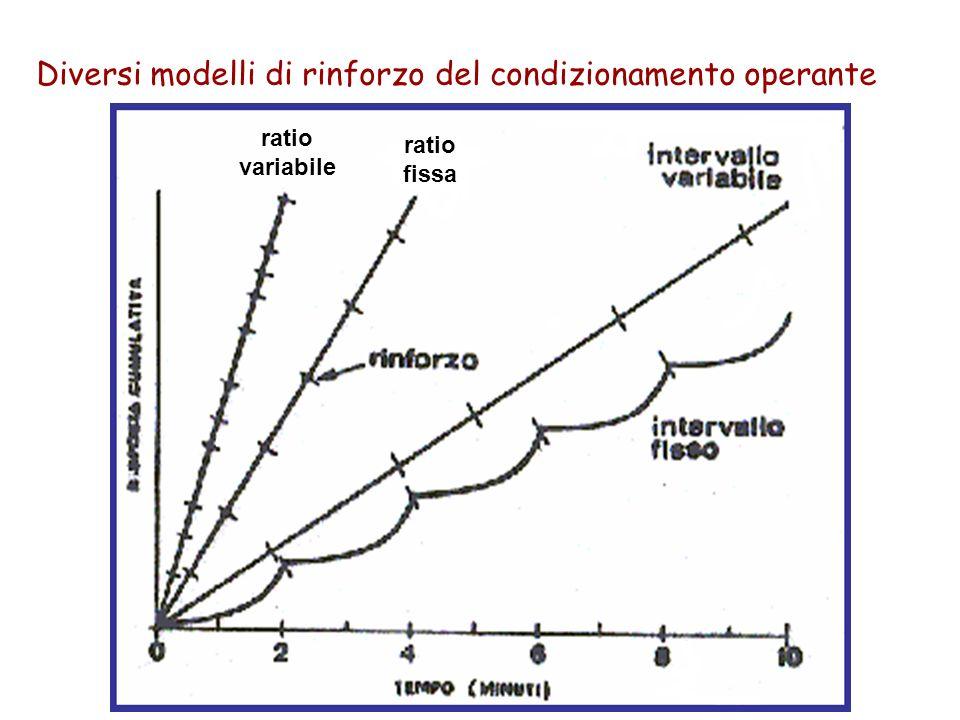 Diversi modelli di rinforzo del condizionamento operante ratio variabile ratio fissa