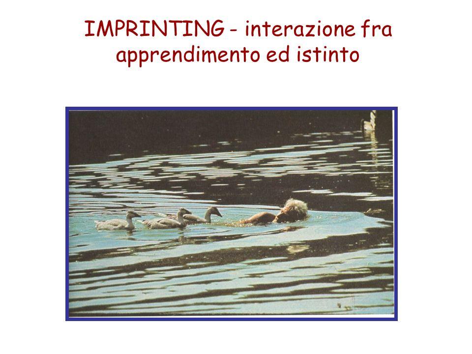 IMPRINTING - interazione fra apprendimento ed istinto
