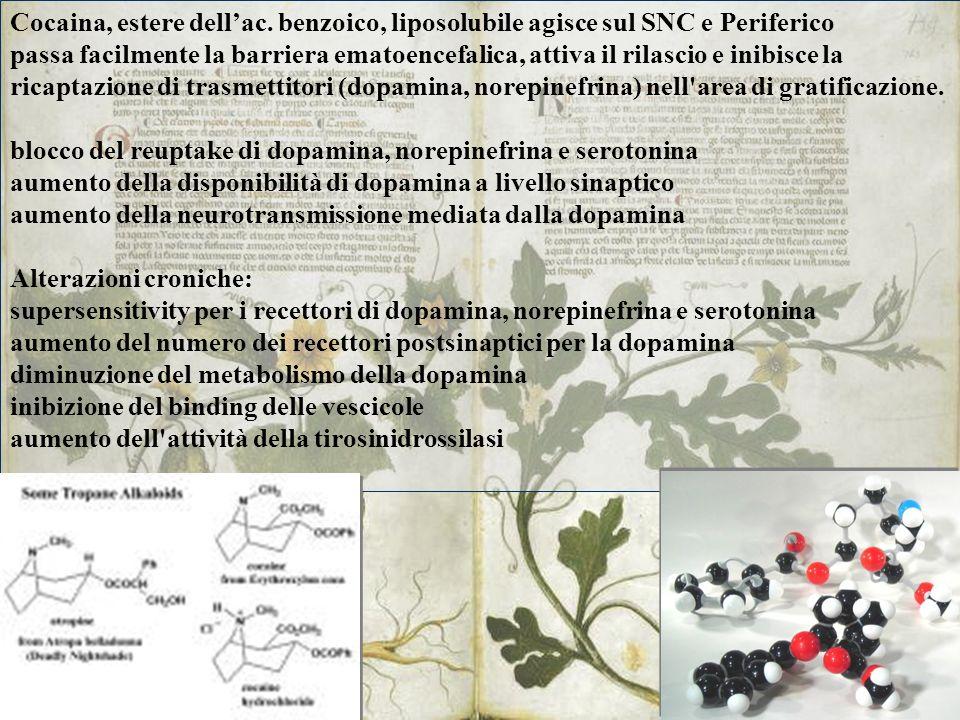 Cocaina, estere dellac. benzoico, liposolubile agisce sul SNC e Periferico passa facilmente la barriera ematoencefalica, attiva il rilascio e inibisce