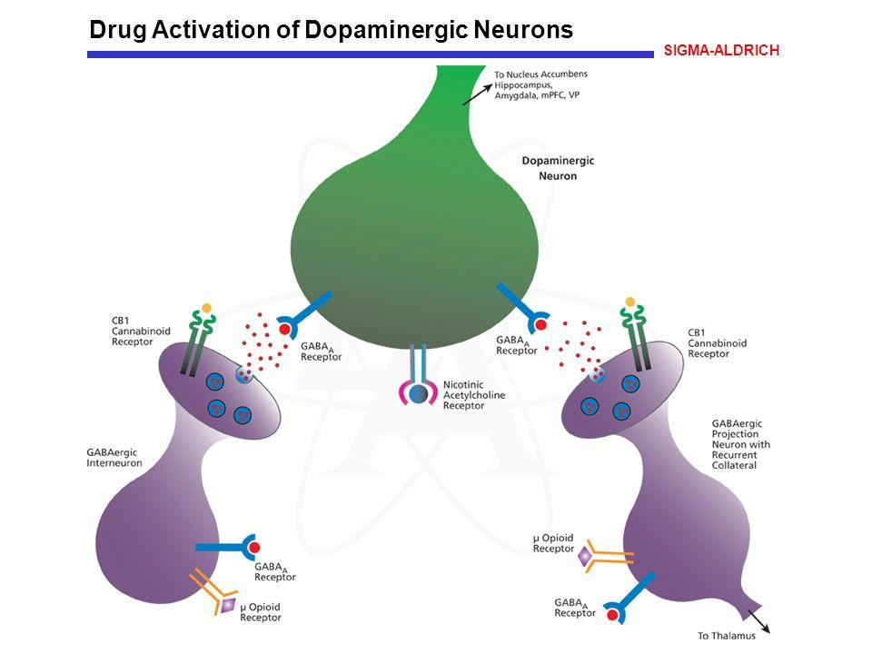 Drug Activation of Dopaminergic Neurons SIGMA-ALDRICH