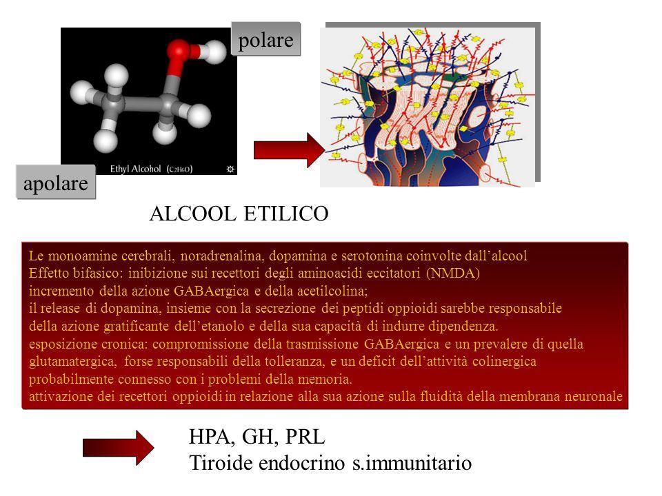 polare apolare Le monoamine cerebrali, noradrenalina, dopamina e serotonina coinvolte dallalcool Effetto bifasico: inibizione sui recettori degli amin
