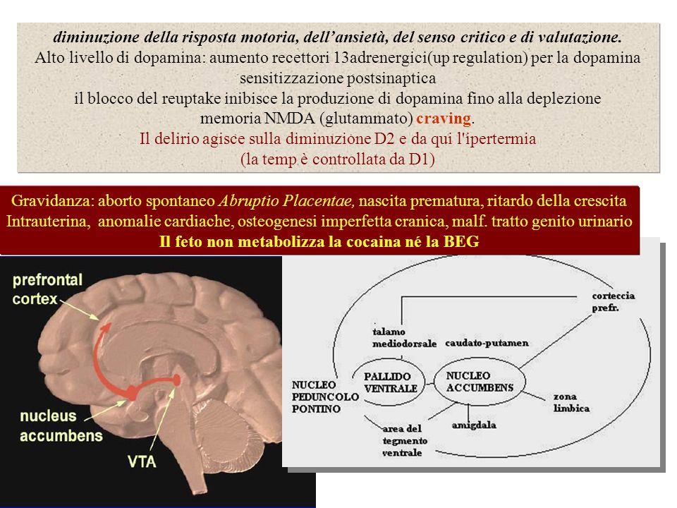diminuzione della risposta motoria, dellansietà, del senso critico e di valutazione. Alto livello di dopamina: aumento recettori 13adrenergici(up regu