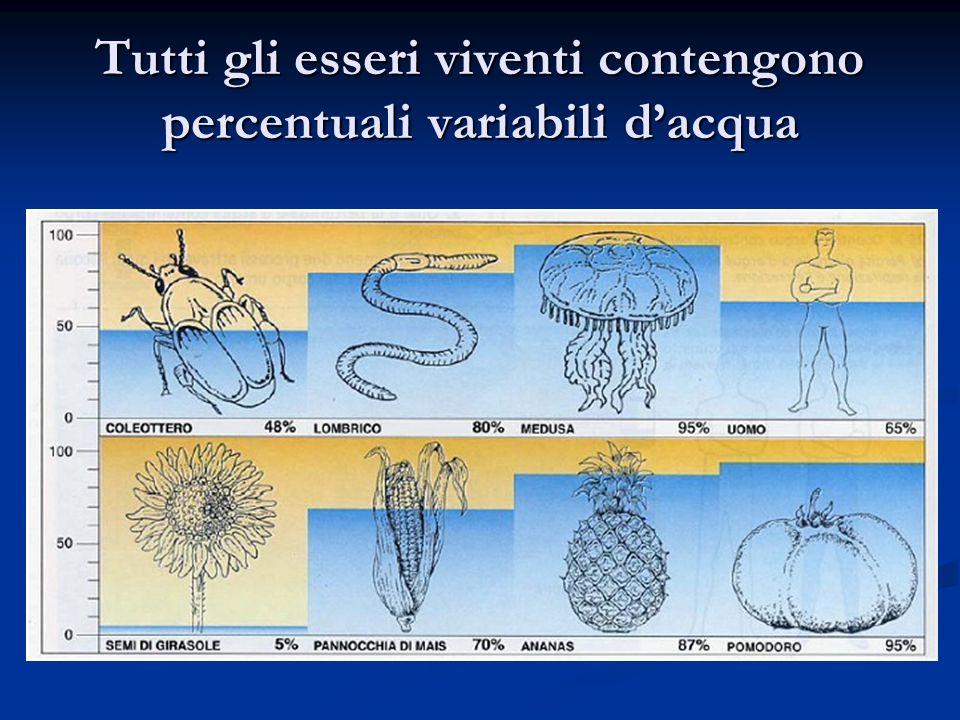 Tutti gli esseri viventi contengono percentuali variabili dacqua