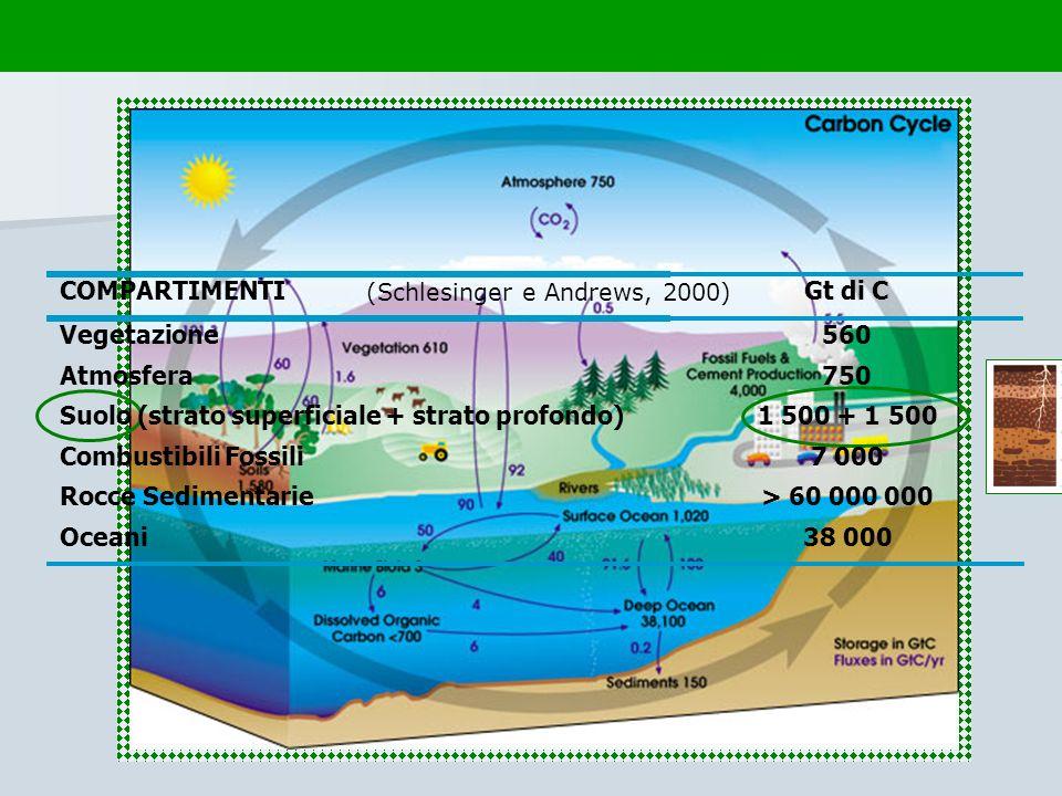 COMPARTIMENTI Gt di C Vegetazione 560 Atmosfera 750 Suolo (strato superficiale + strato profondo) 1 500 + 1 500 Combustibili Fossili 7 000 Rocce Sedim