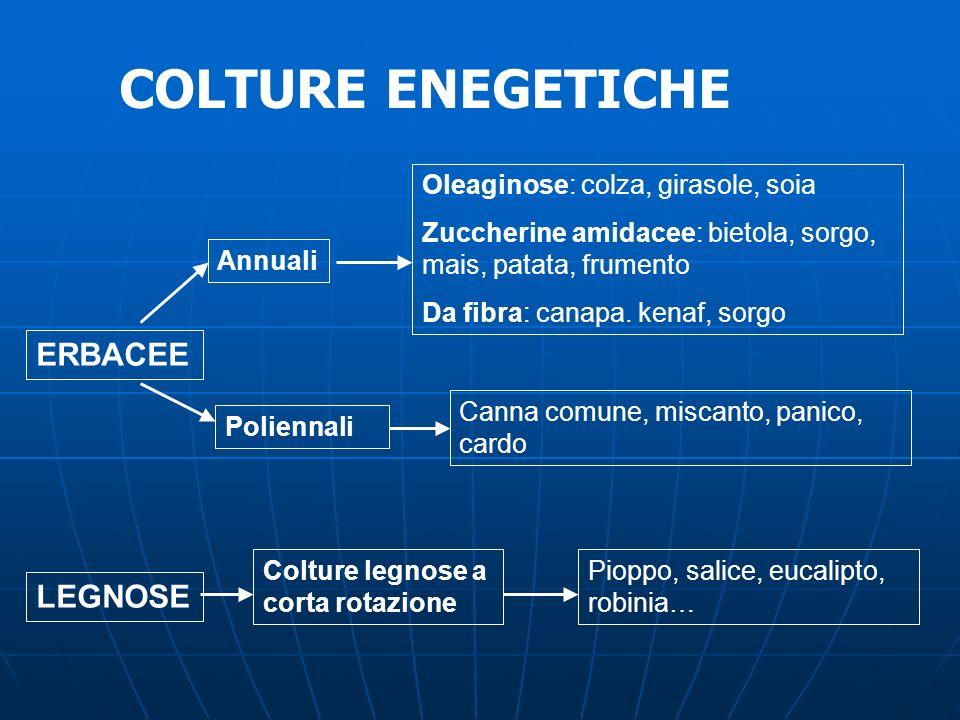Oleaginose: colza, girasole, soia Zuccherine amidacee: bietola, sorgo, mais, patata, frumento Da fibra: canapa. kenaf, sorgo Canna comune, miscanto, p