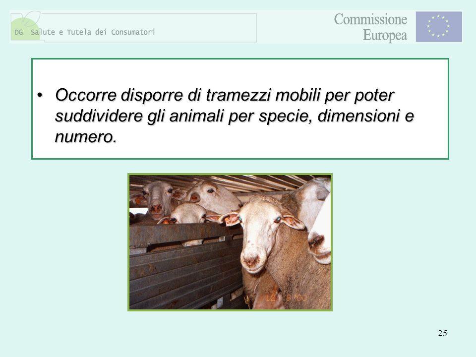 25 Occorre disporre di tramezzi mobili per poter suddividere gli animali per specie, dimensioni e numero.Occorre disporre di tramezzi mobili per poter