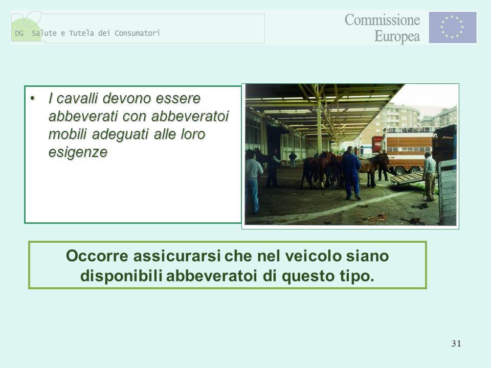 31 I cavalli devono essere abbeverati con abbeveratoi mobili adeguati alle loro esigenzeI cavalli devono essere abbeverati con abbeveratoi mobili adeg